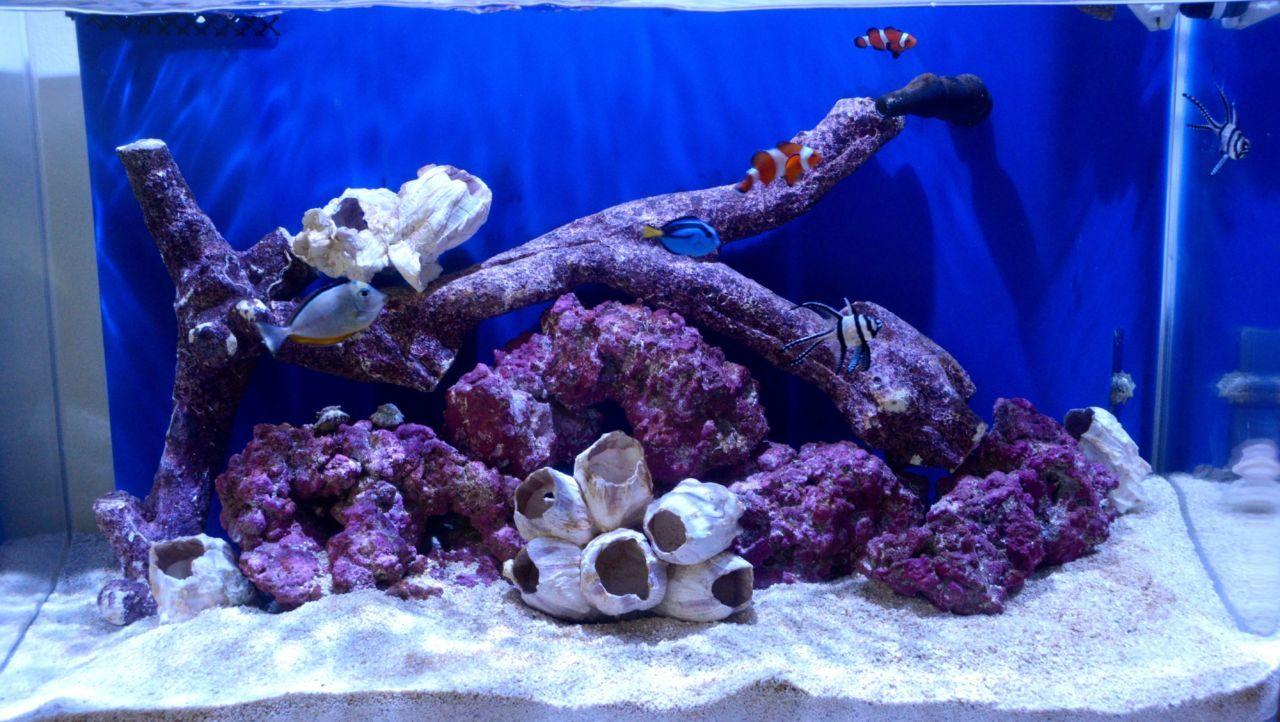 20 Gallon Saltwater Tank - Reef Bar Aquarium Services - reef-bar.com