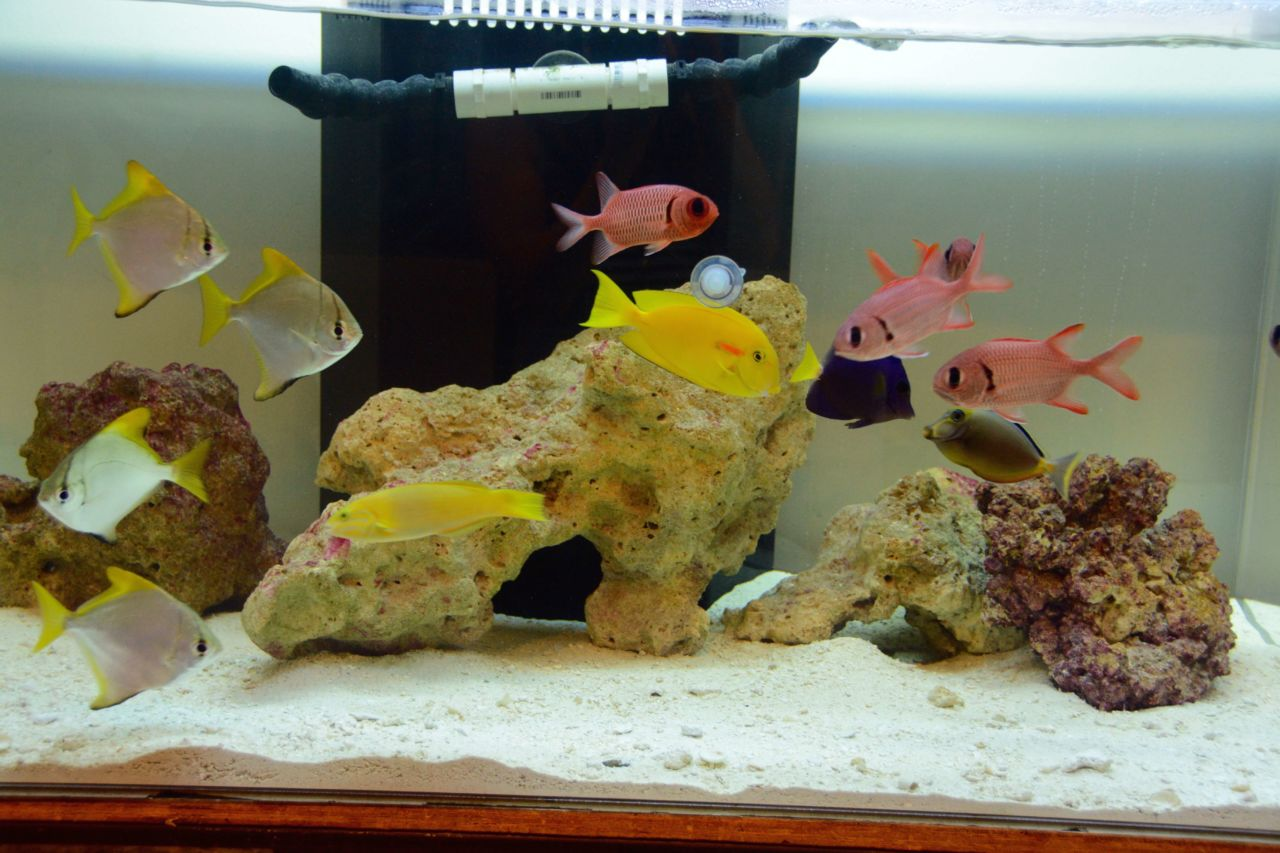 Saltwater Tank - Reef Bar Aquarium Services - reef-bar.com